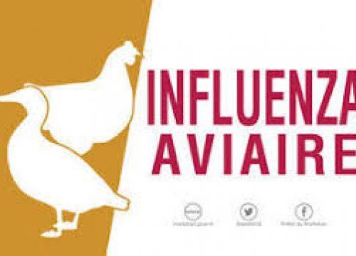 Déclaration de détention d'oiseaux pour lutter contre l'influenza aviaire